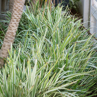 grasses-palms-mulch