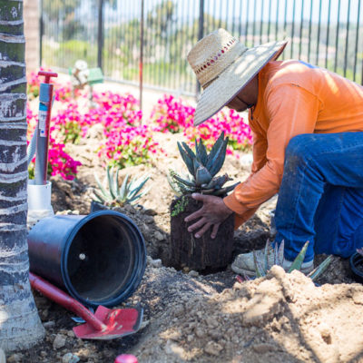 ongoing maintenance planting