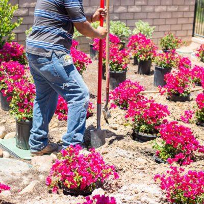 garden maintenance planting