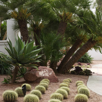 xeriscaping-cactus-agave