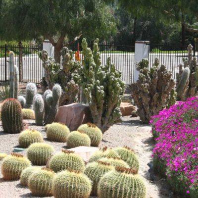 xeriscaping-cactus-natives