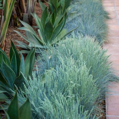 drought tolerant-brick paver walkway edging