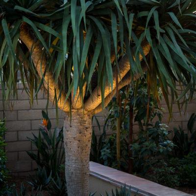 drought tolerant landscaping-outdoor lighting