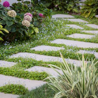 hydrangeas-stone path