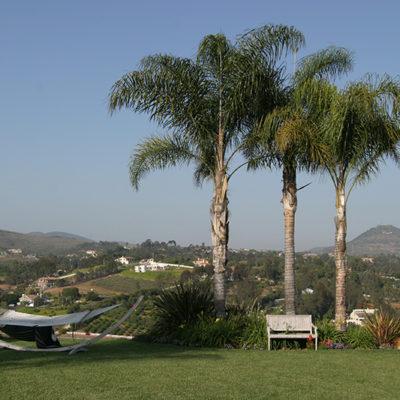 lawn care maintenance view