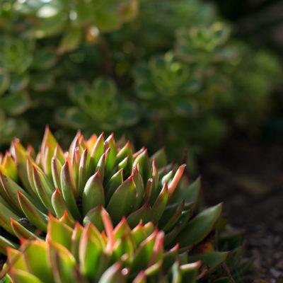 succulents-bark mulch