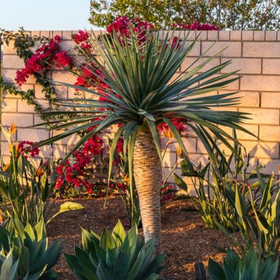 water conservation landscaping-bark mulch